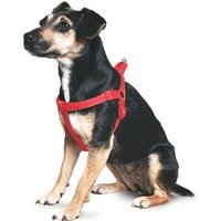 Ancol Padded Harness Red XL