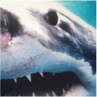 Savas & Sido - Royal Bunker (Vinyl+Download)