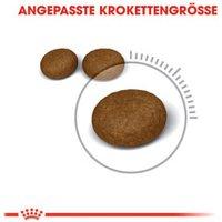 Royal Canin Hair & Skin 33 (10 kg)