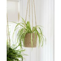 Tall Hanging Plant Pot