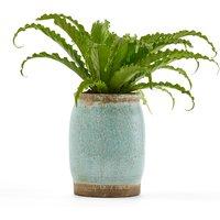 Euphyllia Planter