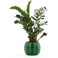 Posidonios Cactus Plant Pot