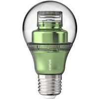 E27 8 6W 827 LED bulb lookatme green