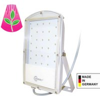 Astir LED plant light