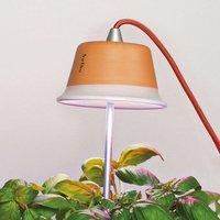 Plant light Chlorophyll for indoor plants