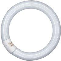 G10q 22W 865 Lumilux T9C fluorescent ring
