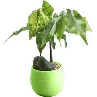 Briday - 1PC green Mini Flower Pots Colourful Round Plastic Plant Flower Pot planters for succulents Decor Plants Desktop Flower Pots Maceta