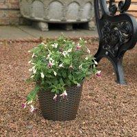20 x Kingfisher Rattan Effect Plastic Garden Indoor Flower Plant Pot Planter