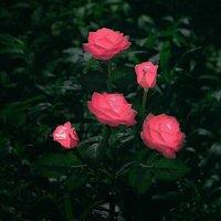 Artificial Rose Shaped LED Solar Lights for Outdoor Garden Decor, Yard, Patio, Grave, Cemetery, Balcony, Christmas Decor - Pink