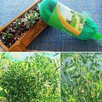 Bird Netting Anti Bird Netting Garden Net Reusable Protective Mesh Net Fencing Protect Plant Trees Fruit Vegetables from Birds Deer