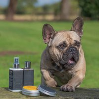 Luxury Prebiotic Dog Grooming And Bath Set With Treats
