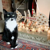 Personalised Wooden Cat Treat Advent Calendar