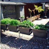 Urban Self Watering Vegetable Allotment