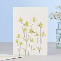 Teasels Card