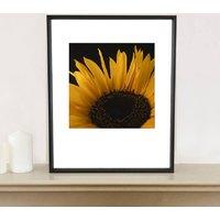 Sunflower Photographic Art Print