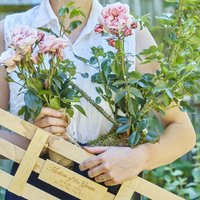 Mother Of The Groom Roses Gift