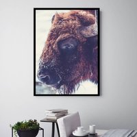 Buffalo Bruce, Canvas Art