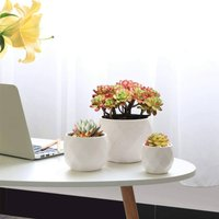 Pack Of Three Small Ceramic Succulent Plant Pots