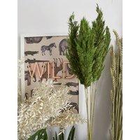 Dried Green Pampas Grass Bunch