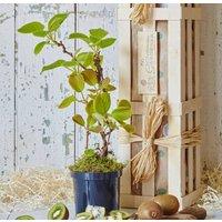The Kiwi Plant Gift