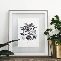 Vintage Botanical Illustration 'Magnolia Cathcartii'