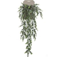 Whyshare Eucalyptus Hanging Bush