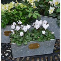 Intwood Vintage Trough Set Of Two