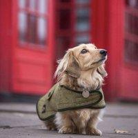 Dachshund Dog Coat, Red/Black/Pink
