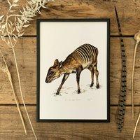 Z Is For Zebra Duiker Illustration Print