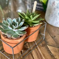 Scandi Style Metal Terracotta Pots With Succulents