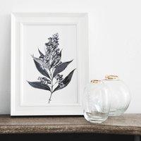 'Buddleia' Vintage Botanical Illustration