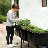 Medium Outdoor Self Watering Vegetable Bed