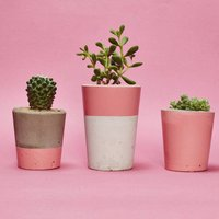 Set Of Three Pink Concrete Pots W/Cacti And Succulents, Pink