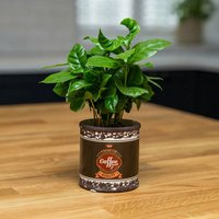 Coffee Plant With Vintage Style Ceramic Coffee Planter, Blue