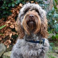 Personalised Cork Dog Harness