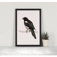 Magpie Illustration Print