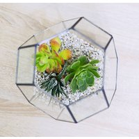 Fairy Lights Geometric Succulent Terrarium