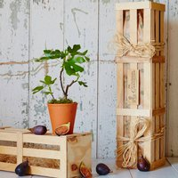 Fig The Family Tree Gift