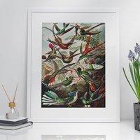 Hummingbird Vintage Style Art Print