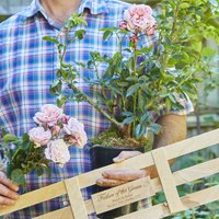 Father Of The Groom Rose Bush Gift