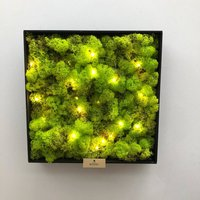 Reindeer Moss Hanging Wall Garden With Fairy Lights