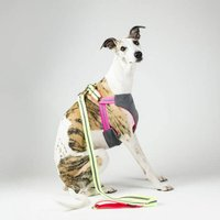 Cooling Dog Harness For Hot Summer Days No Pull