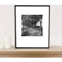 Oak Trees, Black And White, Art Print