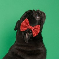 Dog Bow Tie Available In Multiple Colours