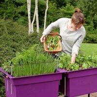 Small Self Watering Plastic Vegetable Planter