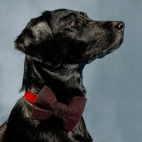 Cosmic Glitter Luxe Dog Bow Tie
