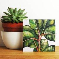 Ficus Bengalesis Greetings Card