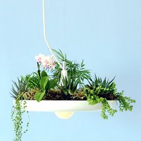 Babylon Hanging Light And Planter