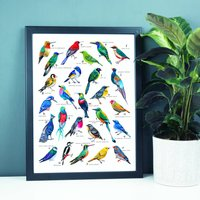 A To Z Of Colourful Birds Print