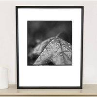 Rain Drops On Maple Leaf Photographic Art Print
